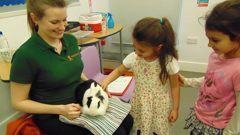 Sacks Morasha pupils meeting animals during the Wild Science visit